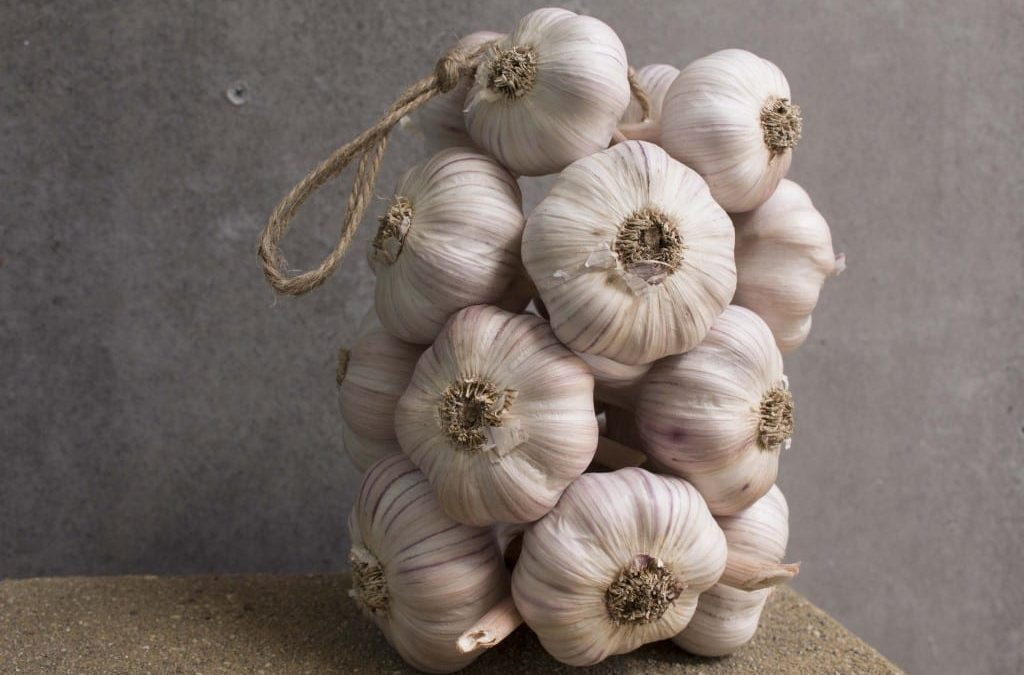 Garlic Festival & Garlic Feast Cookbook